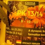 Canna PK 13/14 feeding schedule: Best time to use Canna PK 13/14 in flowering cycle for marijuana