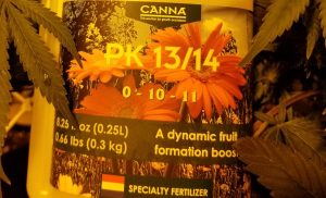 Canna PK 13/14 is a nutrient used during flowering. It is 0-10-11 NPK, so it has 0% Nitrogen, 10% Phosphorus and 11% Potassium