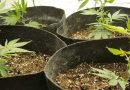 How to choose the best growing mediums for marijuana plants