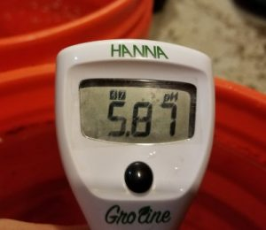 This batch of nutrient solution had a Ph of 5.87, right within the range of 5.8-6.0 that works best for watering in coco.