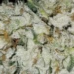 Flushing weed: how to flush marijuana